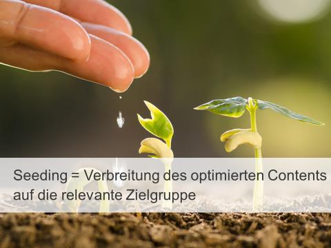 Seeding Prozess