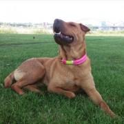 Bürohund Lexy