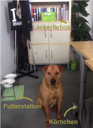 Hundegerechtes Büro