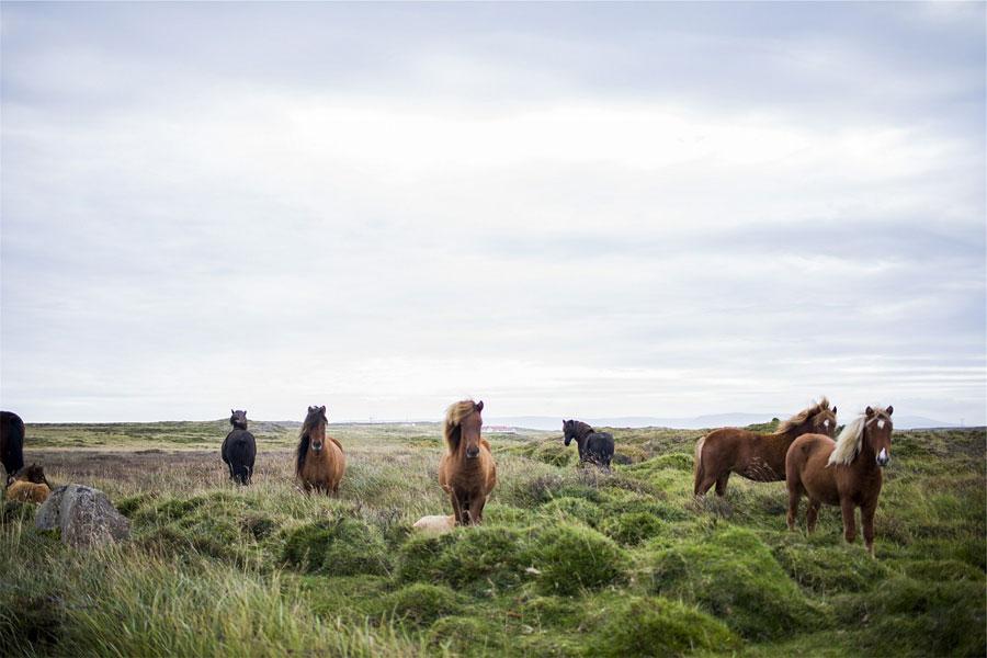 Beispiel: Urlaub auf Island - Finde heraus, welche Inhalte deine Zielgruppe interessieren